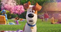 The Secret Life Of Pets 2 (2019) [WEBRip] [720p] [YTS]